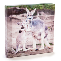 KANGAROO & JOEY CANVAS ART