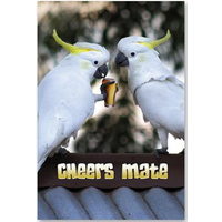 TWO COCKIES 'CHEERS MATE' GREETING CARD