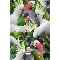 AUSSIE BIRDS GREETING CARD