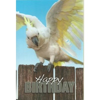 SWAN'S COCKY BIRTHDAY GREETING CARD